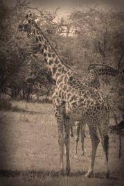 Serengeti National Park (17)