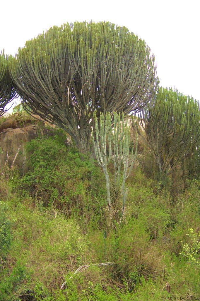 Serengeti National Park (172)