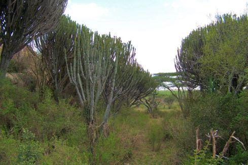 Serengeti National Park (173)