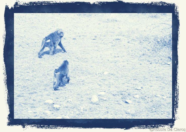 Serengeti National Park (178)