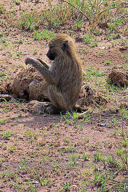Serengeti National Park (179)