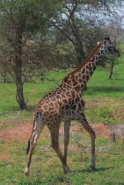 Serengeti National Park (18)