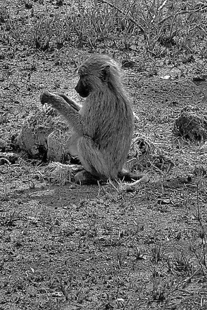 Serengeti National Park (180)