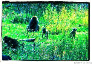 Serengeti National Park (181)