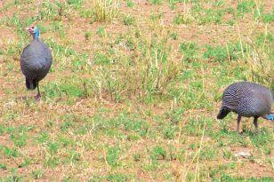 Serengeti National Park (183)