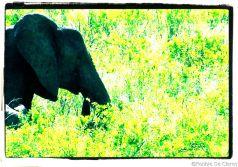 Serengeti National Park (188)