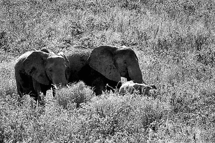 Serengeti National Park (190)