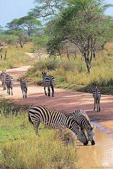 Serengeti National Park (191)