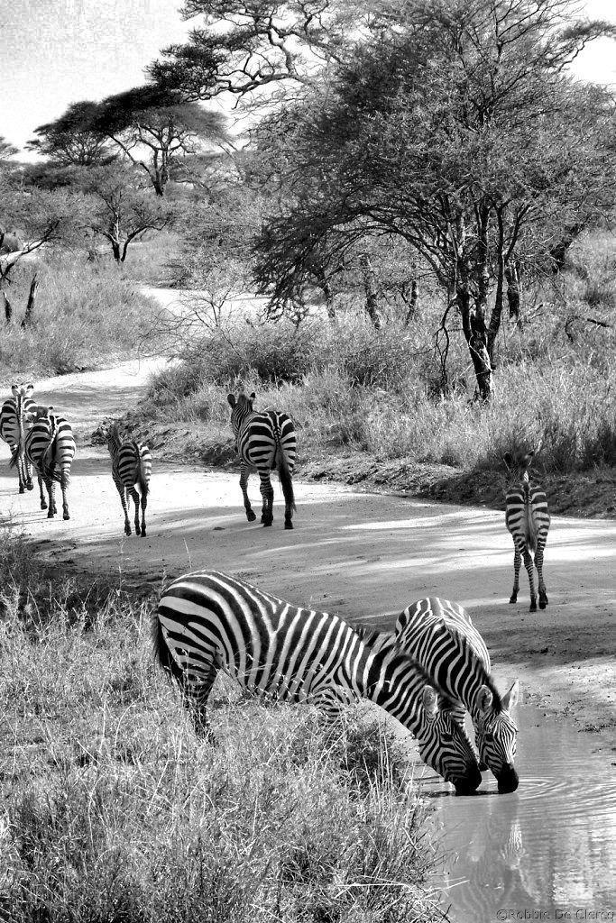 Serengeti National Park (192)