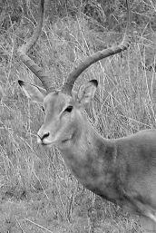 Serengeti National Park (196)