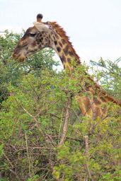 Serengeti National Park (198)