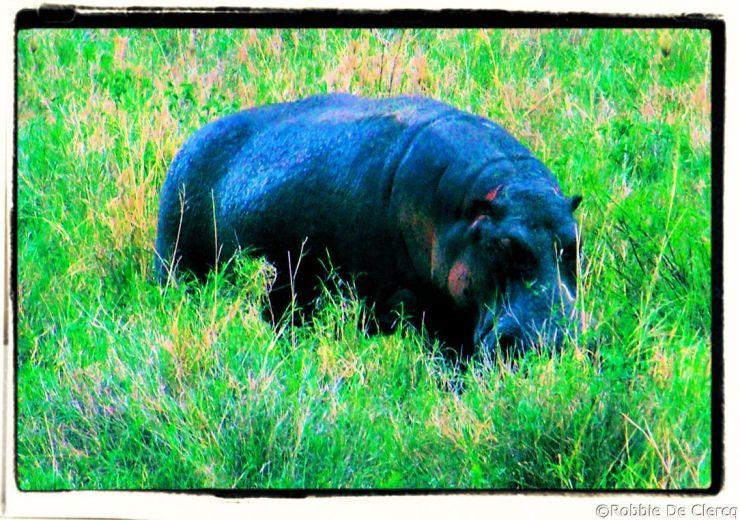 Serengeti National Park (200)