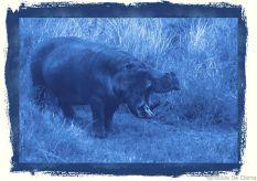 Serengeti National Park (204)