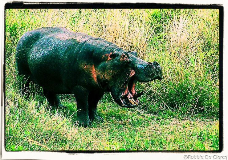 Serengeti National Park (205)