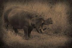 Serengeti National Park (206)