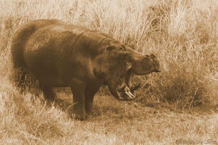 Serengeti National Park (207)