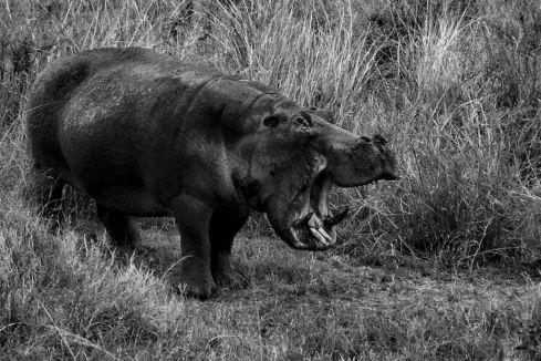 Serengeti National Park (208)