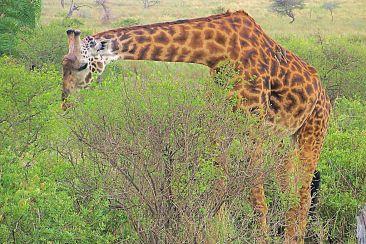 Serengeti National Park (209)