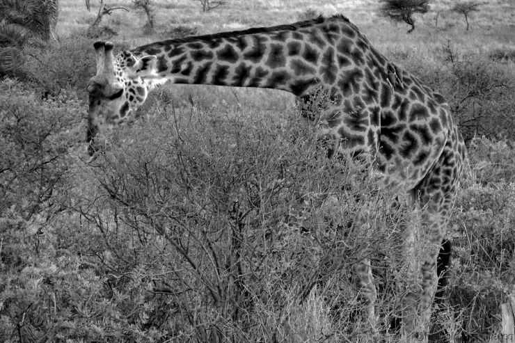 Serengeti National Park (210)