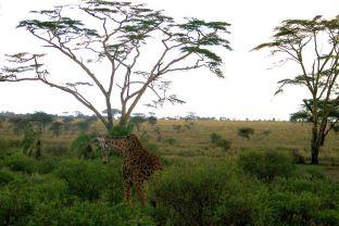 Serengeti National Park (212)