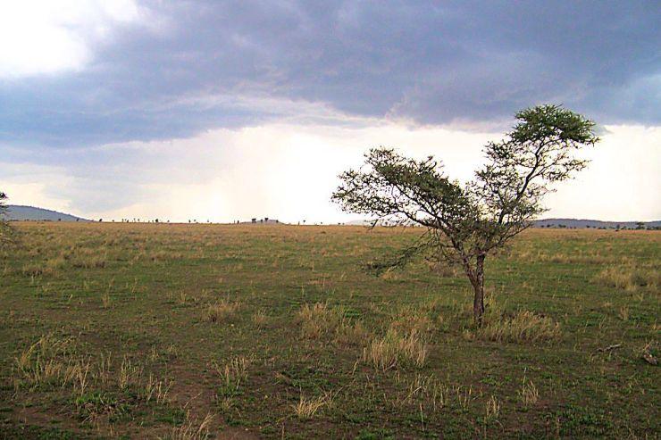 Serengeti National Park (213)