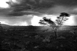 Serengeti National Park (214)
