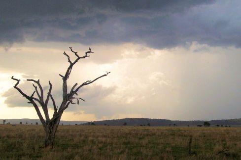 Serengeti National Park (216)