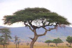 Serengeti National Park (218)