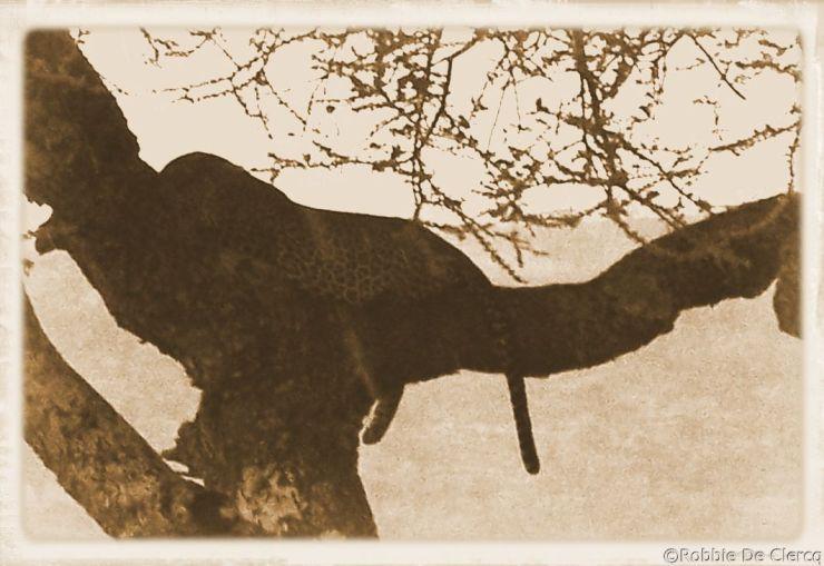 Serengeti National Park (219)