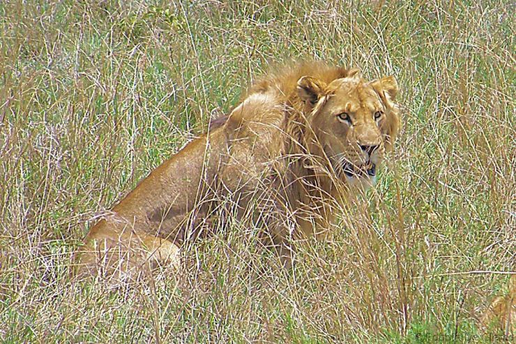 Serengeti National Park (22)