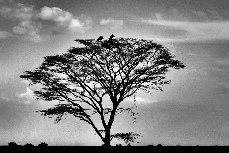 Serengeti National Park (221)
