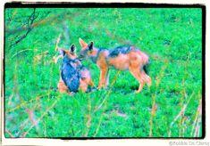 Serengeti National Park (227)
