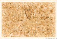 Serengeti National Park (228)