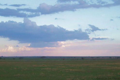 Serengeti National Park (229)