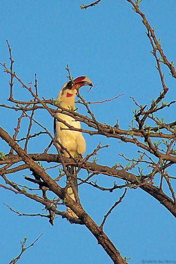 Serengeti National Park (232)