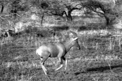 Serengeti National Park (235)