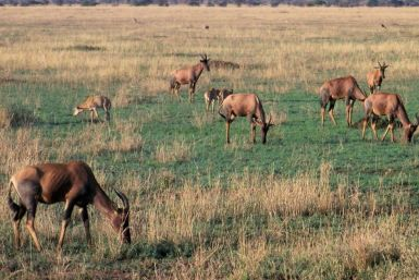 Serengeti National Park (237)