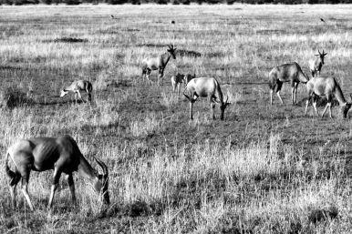Serengeti National Park (238)