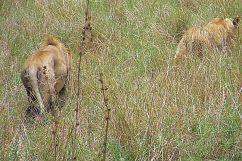 Serengeti National Park (24)