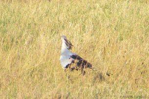Serengeti National Park (243)