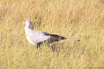 Serengeti National Park (244)