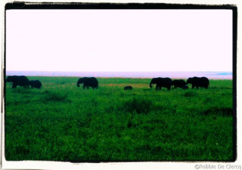 Serengeti National Park (246)