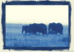 Serengeti National Park (247)