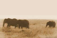 Serengeti National Park (249)