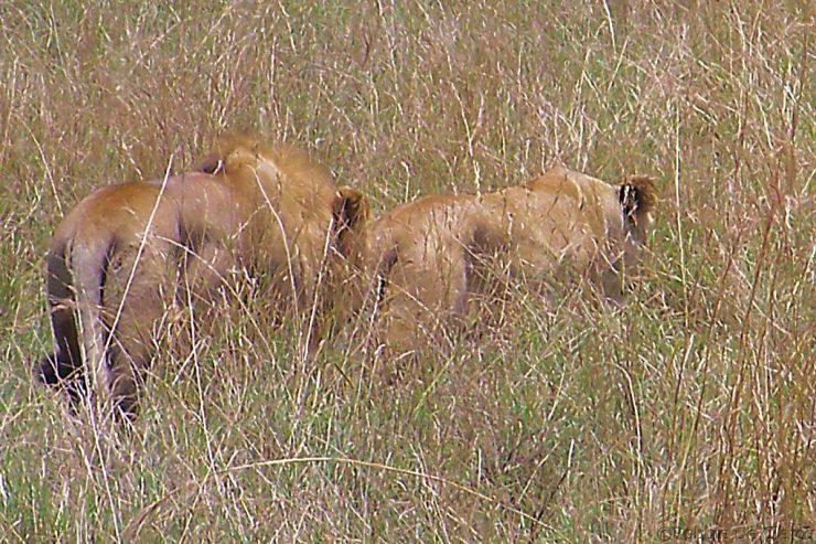 Serengeti National Park (25)