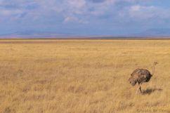 Serengeti National Park (250)