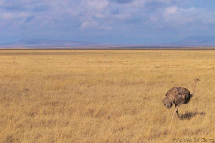 Serengeti National Park (250)