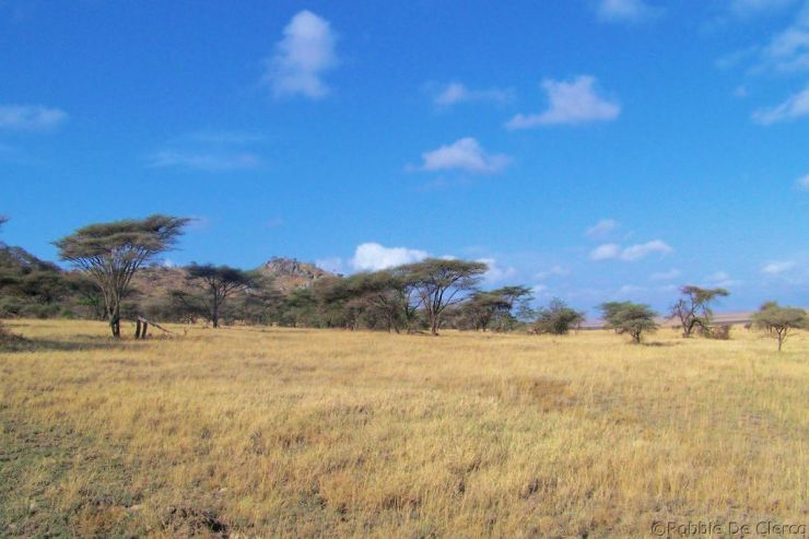 Serengeti National Park (251)
