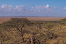 Serengeti National Park (252)