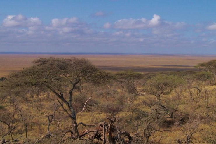 Serengeti National Park (252)